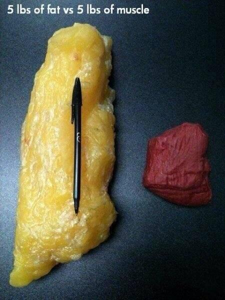 fat vs muscle.jpg